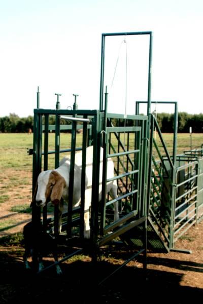 lamb shelter new creep for feeders iae feedershelter feeder farmkit com sheep show sale